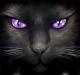 avatar Dame_Kali