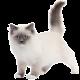 avatar nath45